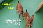 DSC_38200830.JPG
